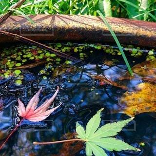 水面の紅葉の写真・画像素材[4856913]