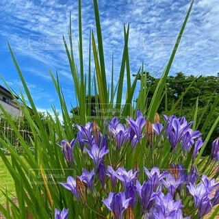 紫色の花で満たされた花瓶の写真・画像素材[4872881]