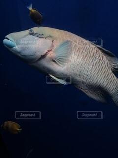 動物,魚,水族館,葉,水中,サメ,海獣,フィン