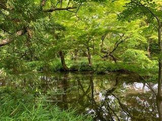 自然,風景,春,屋外,湖,川,水面,水辺,池,反射,草,樹木,運河,草木,水辺の森