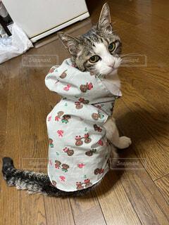 猫,動物,屋内,床