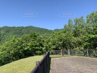 自然,風景,空,屋外,山,草,樹木,草木
