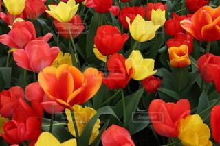 花,赤,草木,フローラ