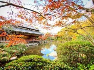 自然,風景,空,秋,紅葉,屋外,湖,水面,葉,草,樹木,紅葉狩り,カエデ