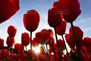 空,花,植物,赤,草木