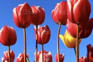 空,春,植物,赤,草木