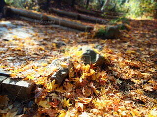 秋,紅葉,屋外,葉,夕方,季節,日差し,山道,美しい,落葉,カエデ