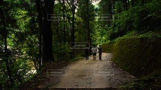 自然,風景,森林,屋外,森,樹木,道,ハイキング,林道