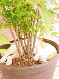 猫,動物,木,緑,植物,かわいい,昼寝,ねこ,ペット,休憩,道,癒し,プランター,歩道,休み,思い出,おやすみ,お休み,すやすや,草木,いやし,ネコ,ベッド,スヤスヤ,グッドナイト