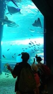 海,魚,水族館,水面,葉,水中,ダイビング,海獣