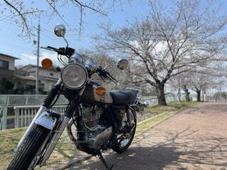 空,春,桜,屋外,駐車場,バイク,樹木,タイヤ,ホイール