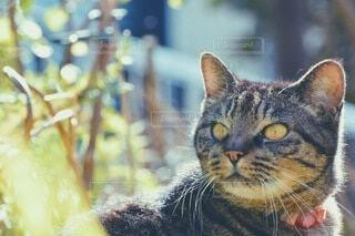 猫,動物,屋外,ネコ科