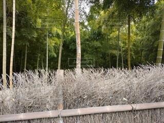 屋外,草,樹木