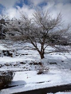 自然,空,秋,冬,雪,屋外,葉,山,樹木,草木,覆う