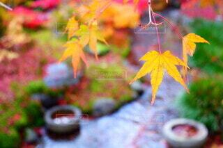 紅葉と小川の写真・画像素材[4811804]