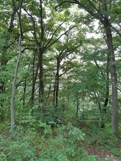 自然,屋外,山,樹木,草木