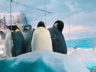 動物,鳥,屋内,雪,水族館,水面,ペンギン,泳ぐ,旅行,可愛い