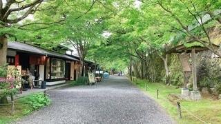 #自然,#京都,#初夏