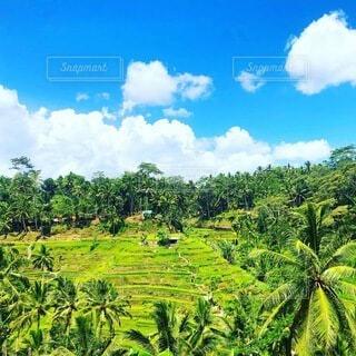 風景,空,屋外,緑,雲,草,樹木,ヤシの木,草木,プランテーション
