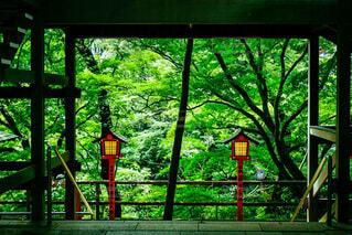 自然,屋外,神社,樹木