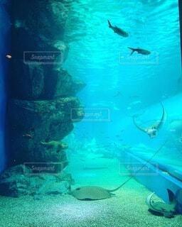 海,魚,水族館,水面,葉,泳ぐ,水中,神秘的,マンタ,ダイビング,エイ,深海,海底,スキューバ ダイビング
