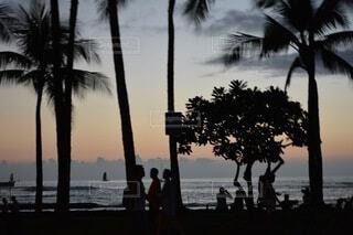風景,海,空,屋外,ビーチ,雲,砂浜,夕暮れ,水面,樹木,ヤシの木,ハワイ,草木,パーム