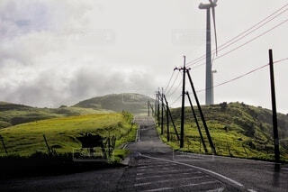 風景,空,屋外,雲,霧,山,草,四国カルスト
