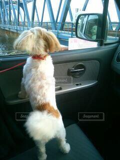 犬,動物,かわいい,車,オシャレ,可愛い,サイドミラー,助手席,おしゃれ,車の中