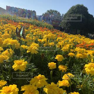 空,花,屋外,黄色,蝶々,草木,ワイルドフラワー