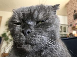 猫,動物,屋内,子猫,グレー,目,ネコ科