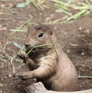 動物,木,屋外,かわいい,草,リス,地面,ご飯,動物園,汚れ