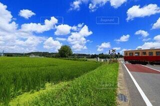 風景,空,鉄道,草木