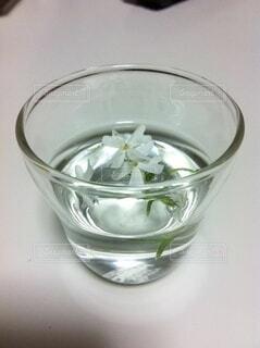 花,屋内,白,水,透明,花瓶,花びら,お花,ガラス,液体,小さい,グラス,カップ,可愛い,ボウル