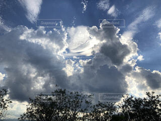 自然,空,屋外,雲,樹木,くもり