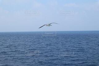 海,空,鳥,屋外,水面,カモメ