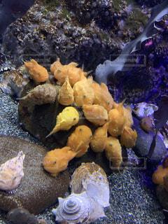 魚,黄色,水族館,密集