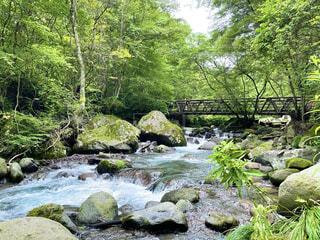 自然,屋外,川,水面,水辺,山,滝,樹木,岩,運河,ガーデン,水辺の森