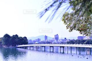 橋,川,福岡