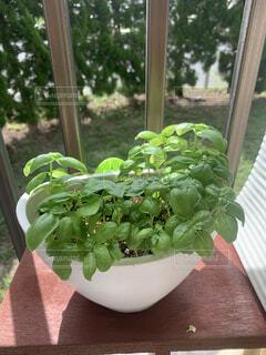 花,緑,窓,葉,植木鉢,観葉植物,ハーブ,草木,ガーデン