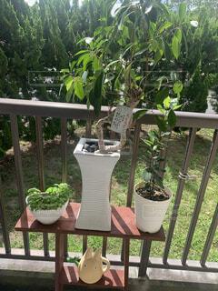屋外,樹木,植木鉢,観葉植物,裏庭
