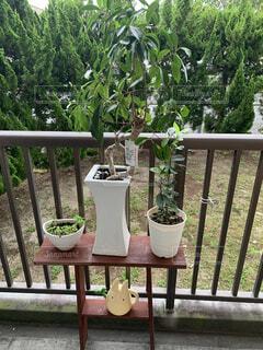 屋外,樹木,植木鉢,観葉植物,草木,ポット,裏庭