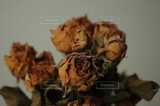 花,バラ,ドライフラワー,薔薇