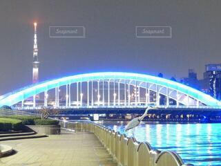 建物,橋,夜景,鳥,東京,スカイツリー,水面,日本,永代橋,中央区