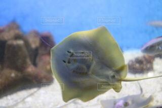 動物,魚,水族館,葉,フィン,海洋無脊椎動物,海洋生物学