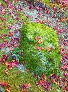 花,秋,紅葉,屋外,草,苔,日本,カラー,ガーデン