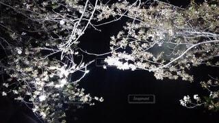 自然,水面,樹木
