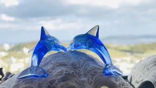 イルカの写真・画像素材[1693203]