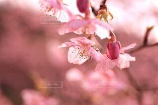 花,春,桜,草木,ブルーム,ブロッサム