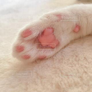 猫,動物,ピンク,白,肉球,癒し,cat,おてて