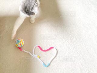 猫,動物,屋内,白,ハート,cat,ブリティッシュショートヘア,猫のおもちゃ